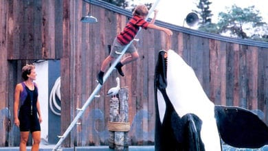 Photo of Free Willy (1993) Leaps Onto Blu-ray This August